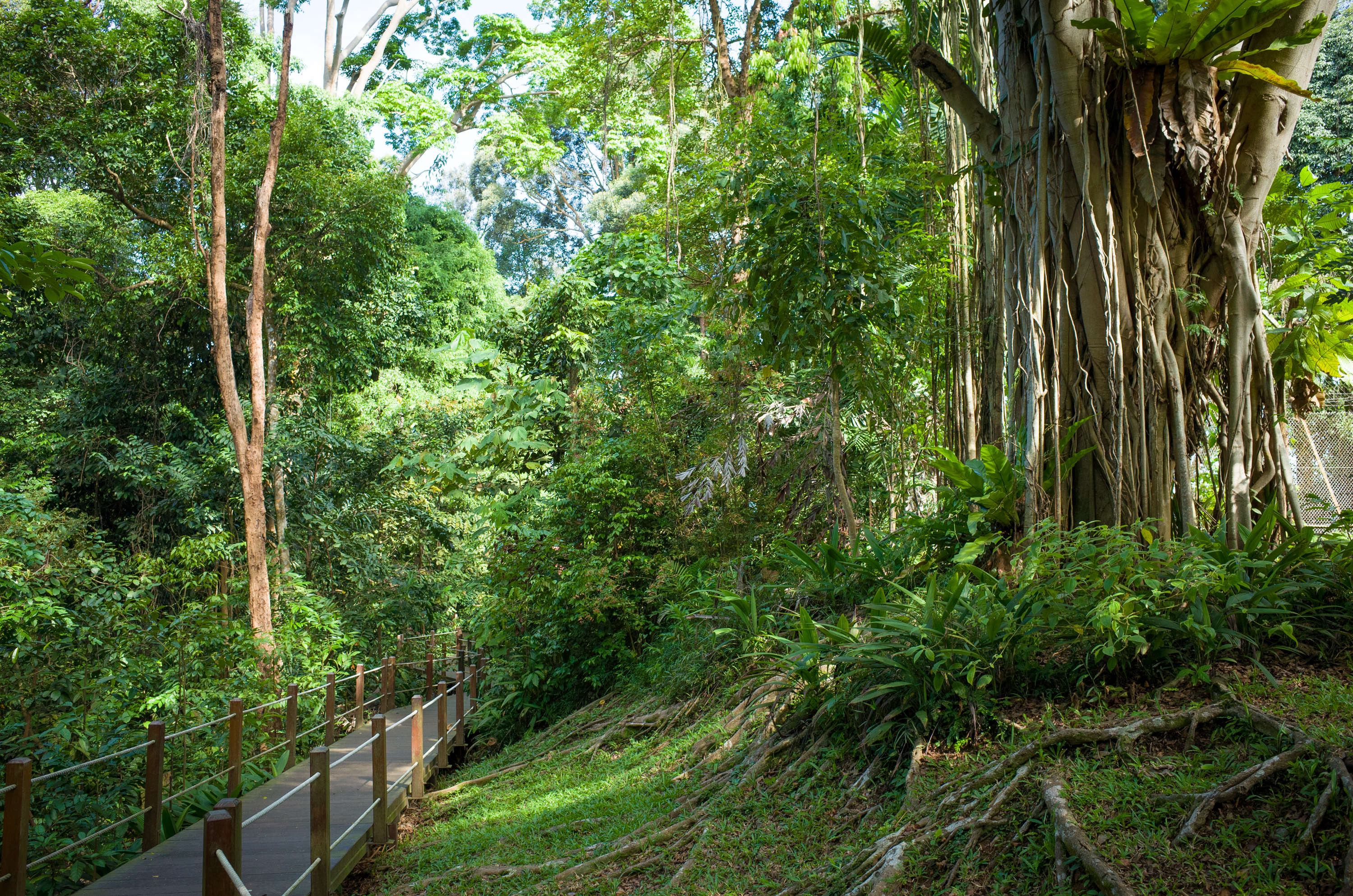 BUKIT TIMAH - Tyersall Learning Forest  - EDGEPROP SINGAPORE
