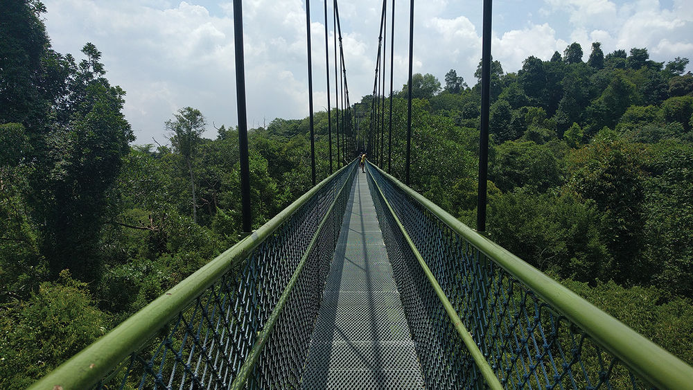 The TreeTop Walk at MacRitchie Reservoir Park is one of the many nature spots close to Lattice One