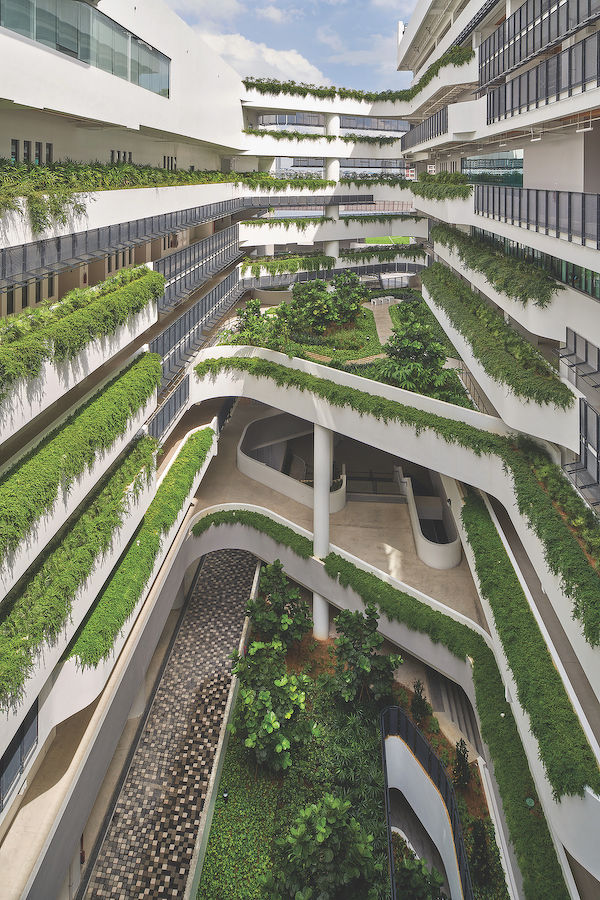 Embracing biodiversity the next step in furthering Singapore's biophilic design: Khew Sin Khoon