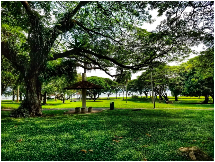 PASIR RIS - In the bloom of verdant health, the Pasir Ris nature scape will continue to appeal to residents and non-residents alike - EDGEPROP SINGAPORE