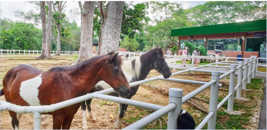 PASIR RIS - Ponies resting quietly between trots at Pasir Ris Park - EDGEPROP SINGAPORE