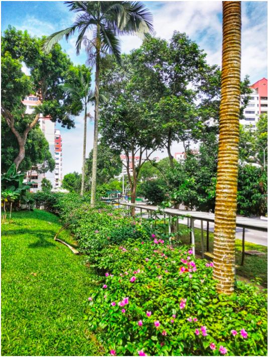CHOA CHU KANG - Choa Chu Kang HDB residents enjoy sunshine, fresh air, and riotous greenery - EDGEPROP SINGAPORE
