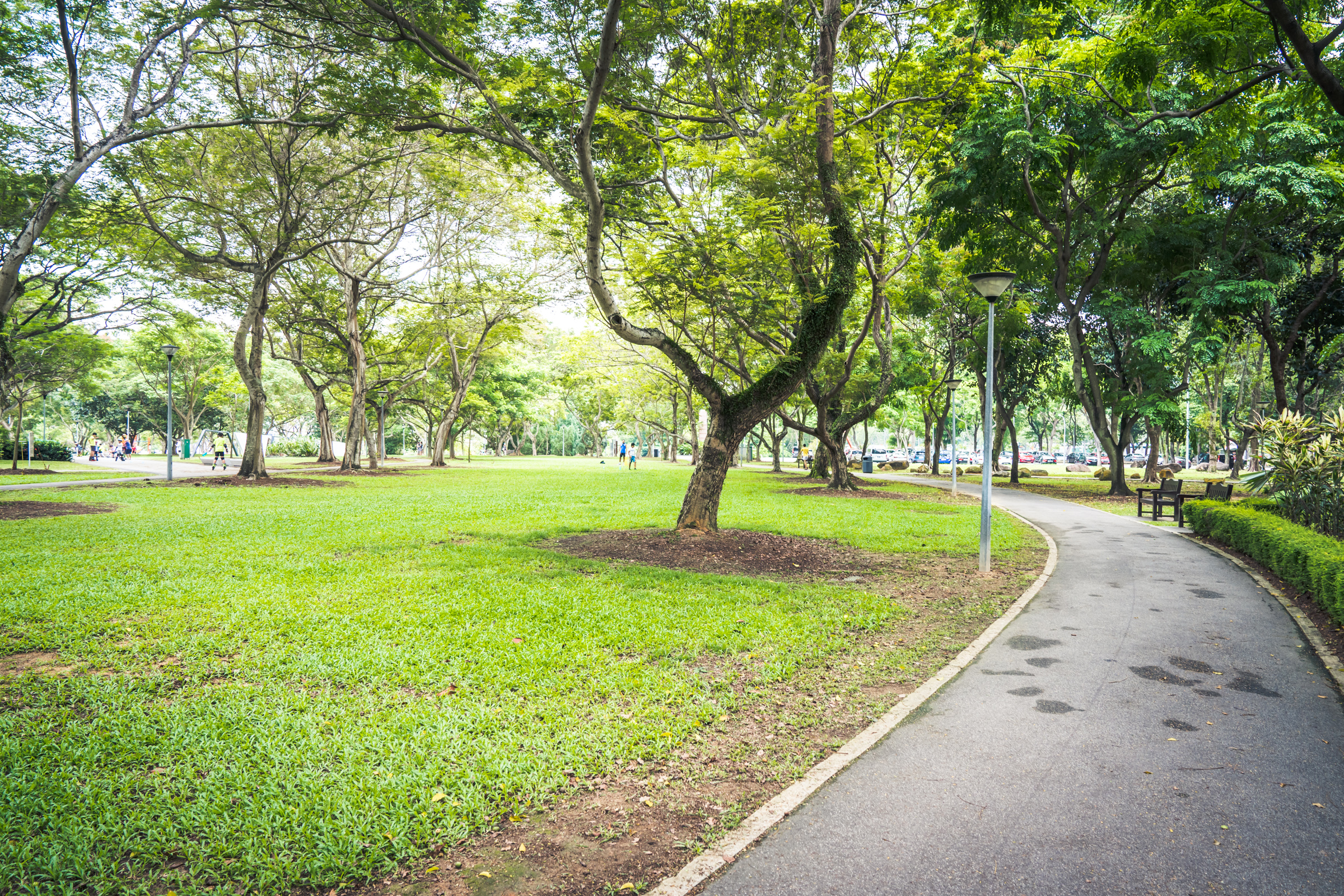 Photo of running path as part of the Tampines park connector